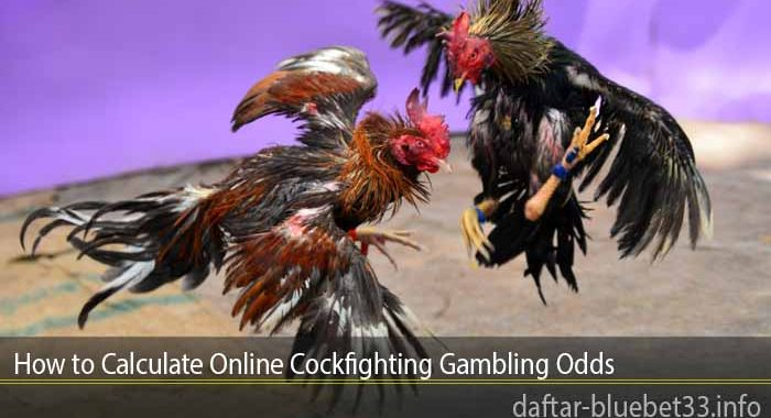 How to Calculate Online Cockfighting Gambling Odds